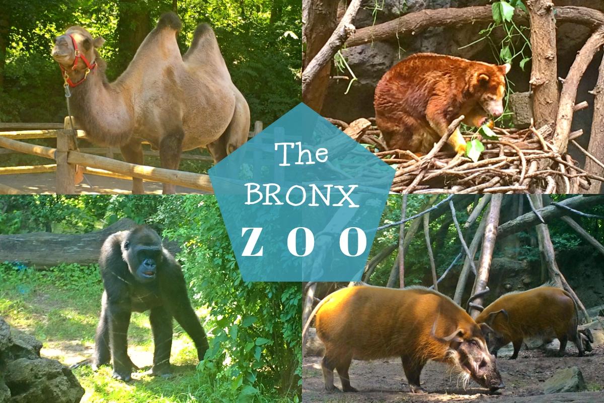 The Bronx Zoo | Chey Chey from the Bay Bronx Zoo Animals
